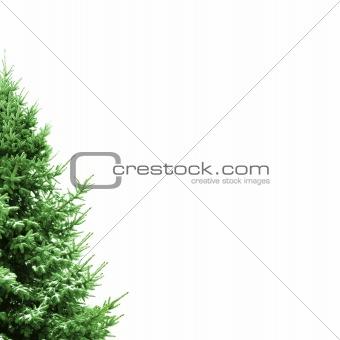 Christmas Card with fir