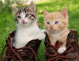 kitten in boots