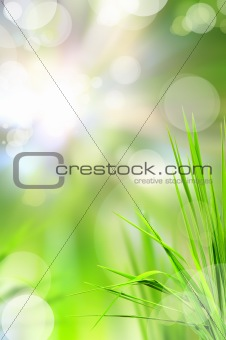 abstract beautiful fresh grass and light reflect in morning