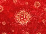 Red Bacteria