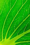 green salad leaf texture
