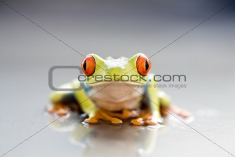 frog closeup
