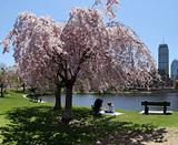 Spring in a city