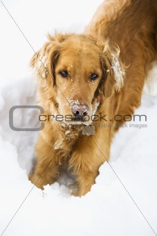 Dog in snow.
