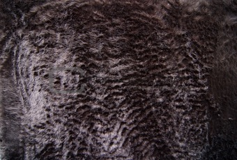 Black Fun Fur
