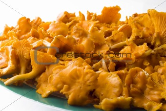 Chanterelle mushrooms on plate isolated on white