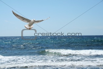 a beautiful seagul