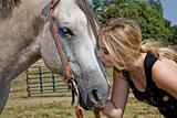Horse 390