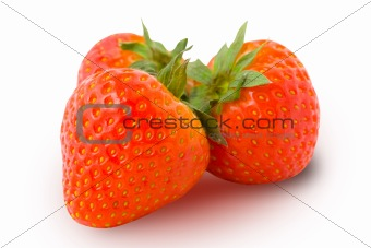 Three ripe strawberries isolated