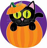 Black Cat in Pumpkin