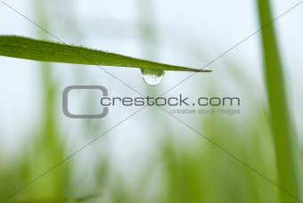 green grass with waterdrop and shallow depth of field