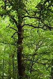 Tree in lush green forest
