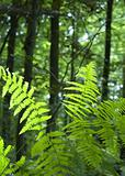 Fern in lush green forest