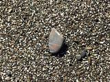 wet pebbles on the beach of the Black Sea 1