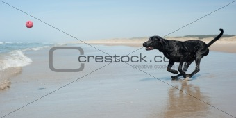 Black dog at the beach