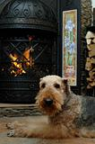 Dog by the fireplace