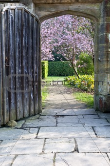 Beautiful fresh Spring blossom viewed through old wooden door an