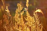 stems of autumn grass