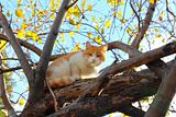 cat on autumn tree