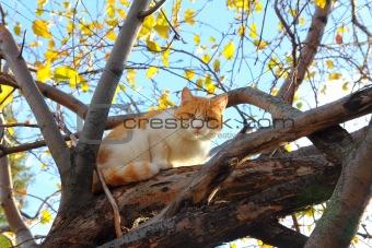 cat on autumn tree