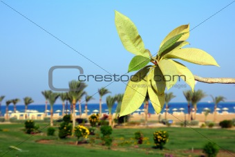 branch with leaves on beach