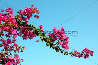 blossom branch with pink flowers