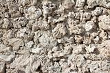 wall of weird fossilized seashells and corals