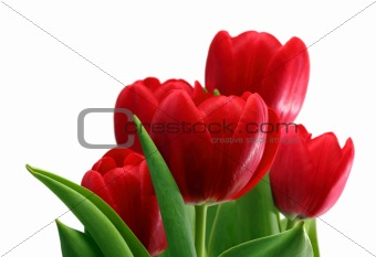 bouquet of red tulips close-up