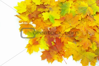 autumn  leafs