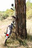 Old bike near tree.