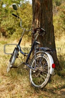 Old bike near tree.