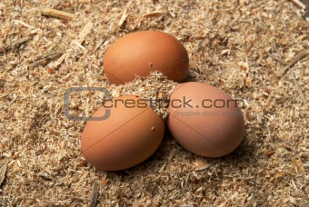 Three brown eggs on sawdust