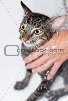 Cat Bathing