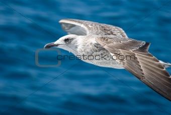 A seagull attack