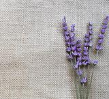 Bunch of lilac lavender flowers on sackcloth