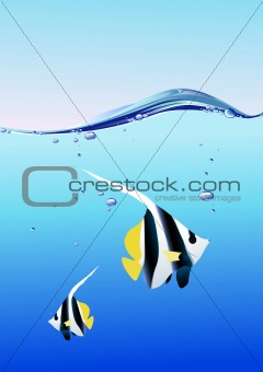 fish in the blue water