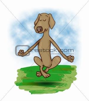 levitating dog