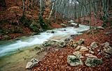 Woodland river stream