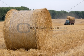 Rolls of straw and tractor