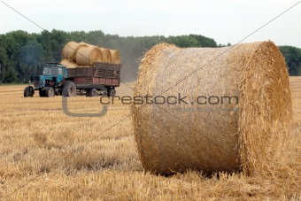 Rolls of straw