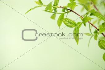 green freshness