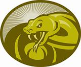 Angry snake viper baring its fangs