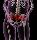 Female medical skeleton with stomach ache
