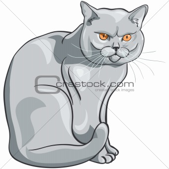 vector british blue cat sits and looks seriously