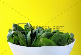 Green fresh spinach on a white plate