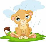 Sad lion cub