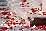 Rose petals on a staircase