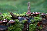 Toadstools in the forest on the overgrown trunk