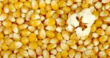 Popcorn on Corn Background