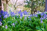 Beautiful Spring flower in forest setting with vibrant colors